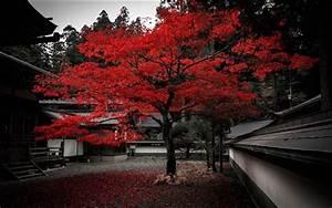 Rote Blätter Baum : japan haus baum rote bl tter herbst hintergrundbilder ~ Michelbontemps.com Haus und Dekorationen