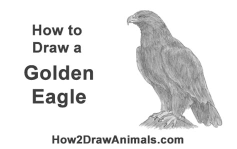 draw  golden eagle