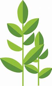 Green Tea Leaves Clipart - ClipartXtras