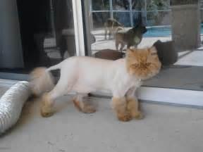 cat haircuts hilarious creative and horrible pet haircuts and