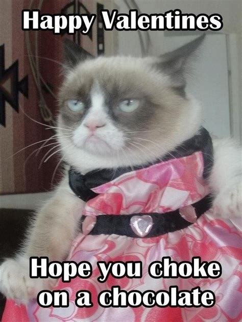 Grumpy Cat Meme Valentines Day - valentines grumpy cat that s a knee slapper pinterest