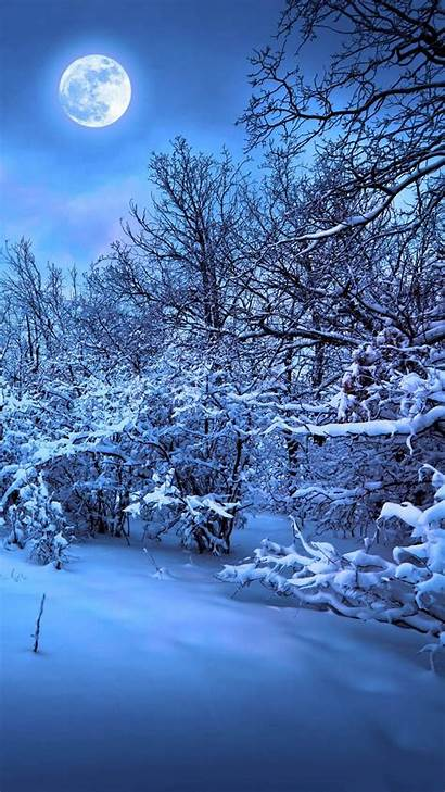 Winter Forest Night Wallpapers 1080p
