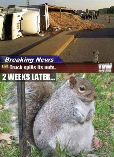 Funny Squirrel Memes - funny animal pics