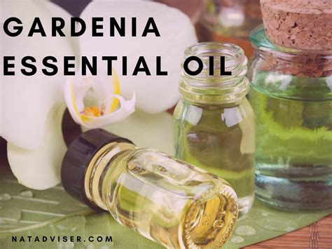 Gardenia Extract Benefits by Gardenia Essential Benefits Aromatherapy And Topical