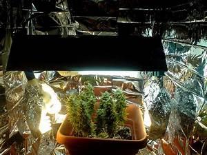 Indoor Grow Closet Setup