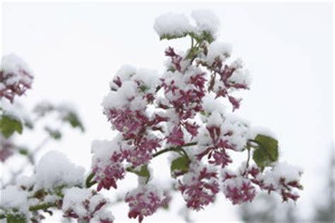 Ein Blühender Garten Im Winter