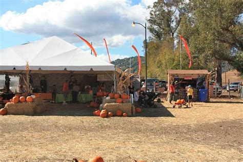 the godmothers of timothy murphy school pumpkin field st 318 | godmothers3