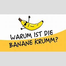 Warum Ist Die Banane Krumm? (papawarum) Youtube