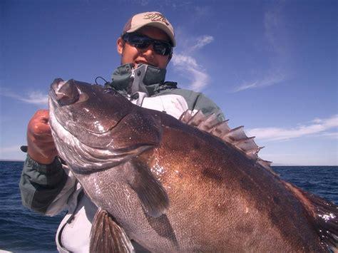 groupers fishing