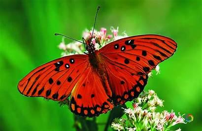Butterfly Desktop Wallpapers Meaning Wallpapersafari Papillon Symbols