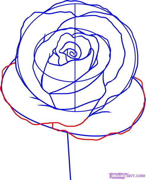 draw  simple rose step  step flowers pop