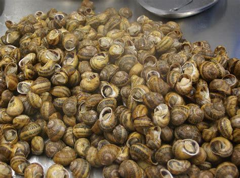 comment cuisiner des escargots comment sont fabriqués nos escargots l 39 escargot des