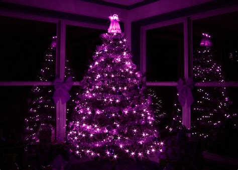 purple christmas tree pictures photos and images for