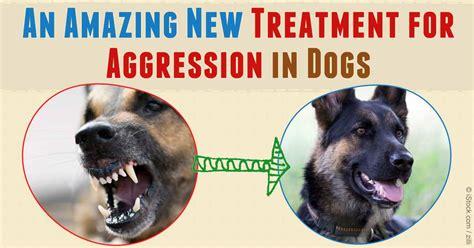 amazing  treatment  dog aggression
