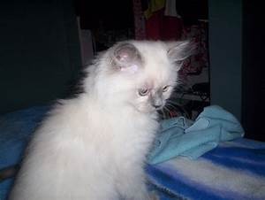 Litiere Chat Fermée : comment emp cher mon chat de mettre de la liti re partout ~ Melissatoandfro.com Idées de Décoration