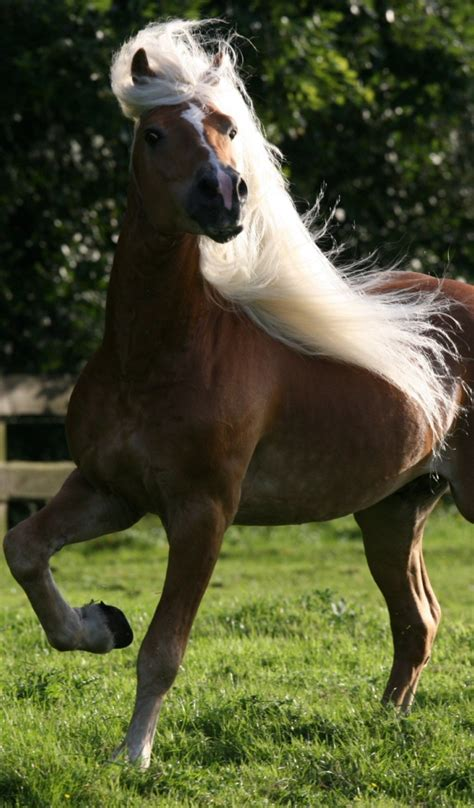 domestic horse horses animals desktop wallpapers