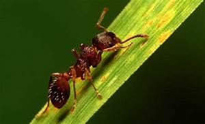Ameisen Bekämpfen Im Garten : ameisen bek mpfen ameisen ausrotten im garten und haus und ungeziefer t ten ~ Frokenaadalensverden.com Haus und Dekorationen