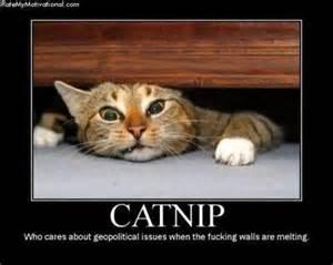 is catnip for cats catnip tidbits kittybluntz