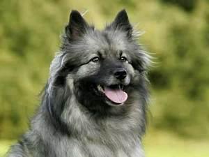 Fluffy Dog Breeds, Fluffy Dog List
