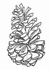 Cone Pine Coloring Drawing Designlooter Google Drawings sketch template