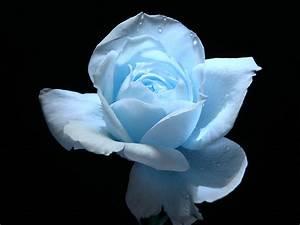 Light And Blue : light blue flower wallpaper wallpapersafari ~ Bigdaddyawards.com Haus und Dekorationen