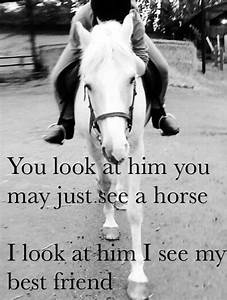 Best 25+ Funny ... Free Horses Quotes