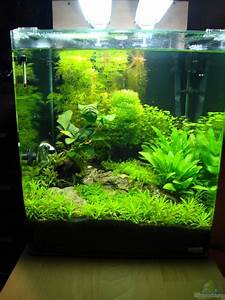 Aquarium Einrichten 60l : decoration aquarium 60 litres ~ Michelbontemps.com Haus und Dekorationen
