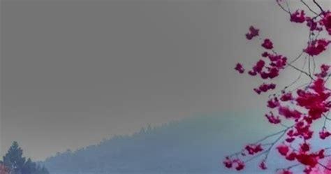 cherry blossom lake  sakura japan  pictures