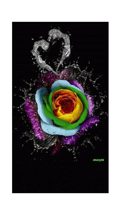 Colorful Rose Gifs Animated Roses Flowers Flower