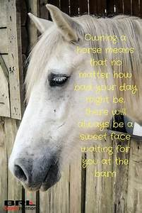 1916 best Horse... Horse Owning Quotes