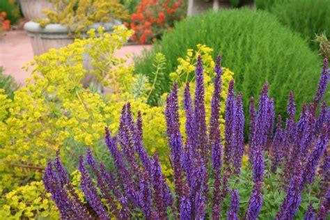 mediterranean plants mediterranean garden design how to create a tuscan garden north coast gardening