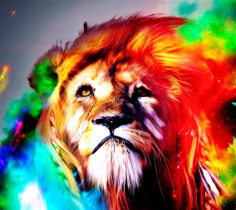 colourful lion    wallpapers