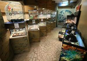 Marineland Pet & Dive Center marks 50 years in business ...
