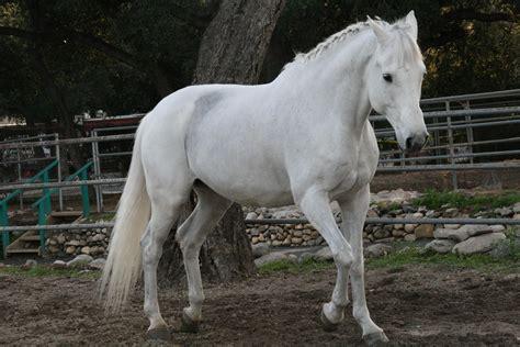 horse horses amazing facts wallpapers male deviantart running hd things grey jumping sugar desktop members land cute pelt colors