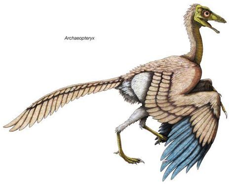 World's Oldest Bird Archaeopteryx 'wore Feather Trousers