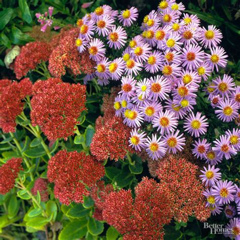 Best Plants For Butterflies For Gardens In The Northeast