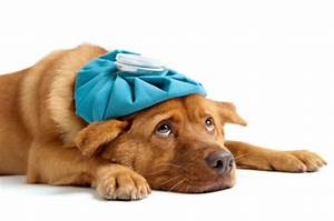 Dog Training Methods Which Leave Your Pet Stressed