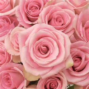 wholesale flowers orlando light orlando pink