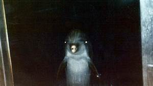 Evil Dolphin Sounds from Underworld, Very Creepy - YouTube  Evil