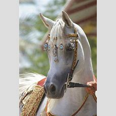 Beautiful Boho #horse Twowisegals