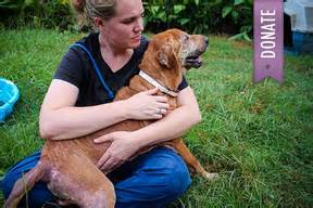 southern pines animal shelter home