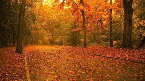 Beautiful Autumn Trees Wallpapers by Beautiful Autumn Trees Wallpapers Http Refreshrose