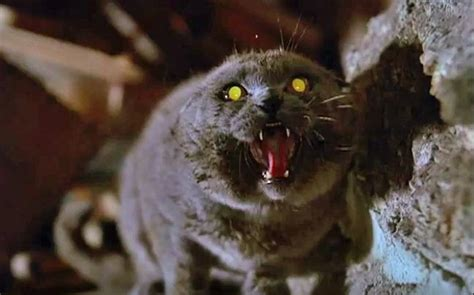 9 Exceedingly Creepy Cat Movies  Mnn  Mother Nature Network