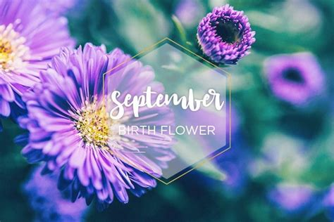 september birth flower aster september birth flower