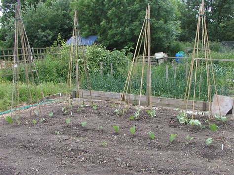 Supporting Runner & Climbing Beans  Building Bean Frames