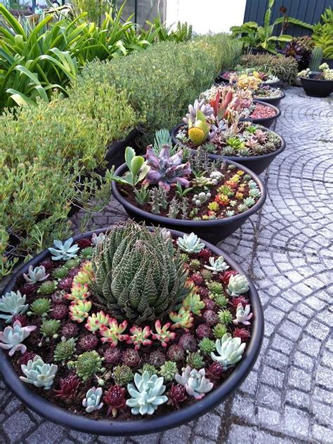 potted succulent gardens container gardening projects