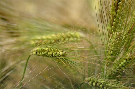 images tree branch field barley prairie flower