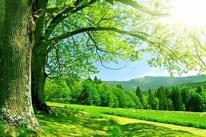 Nature Wallpapers Summer Pakistan Flag Natural Pak