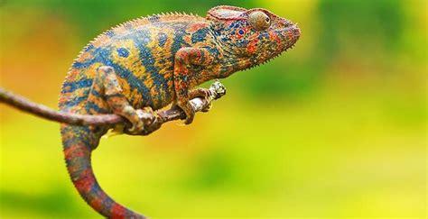 chameleon cards trial run session melbourne au change