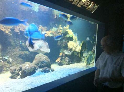 aquarium marin du cap d agde aquarium cap d agde 28 images l aquarium du cap d agde visitesetparcs aquarium du cap d